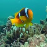 UW-Nemo